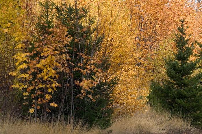 Закружила осень листопадами, заблистала хрупкой красотой... 27540