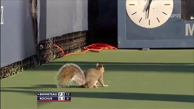 Белка теннисистка
