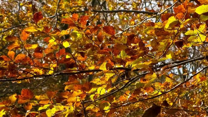 Закружила осень листопадами, заблистала хрупкой красотой... 38315