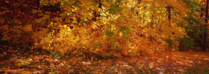 Закружила осень листопадами, заблистала хрупкой красотой... 66531
