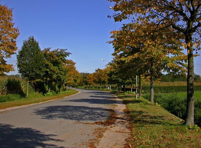 Закружила осень листопадами, заблистала хрупкой красотой... 26074