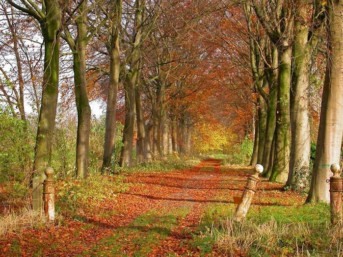 Закружила осень листопадами, заблистала хрупкой красотой... 90434