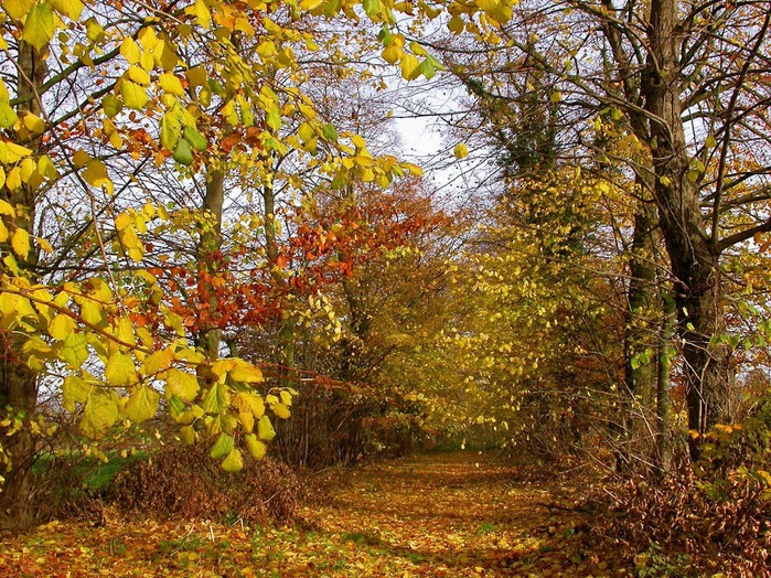 Закружила осень листопадами, заблистала хрупкой красотой... 42251