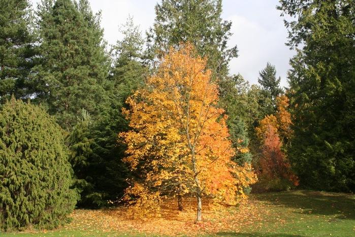 Закружила осень листопадами, заблистала хрупкой красотой... 17337