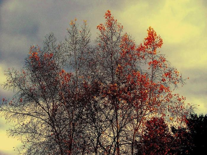 Закружила осень листопадами, заблистала хрупкой красотой... 22134