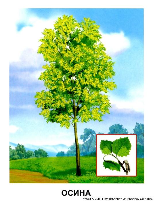 Деревья (02) (539x700, 300Kb)