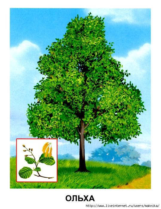 Деревья (04) (539x700, 344Kb)