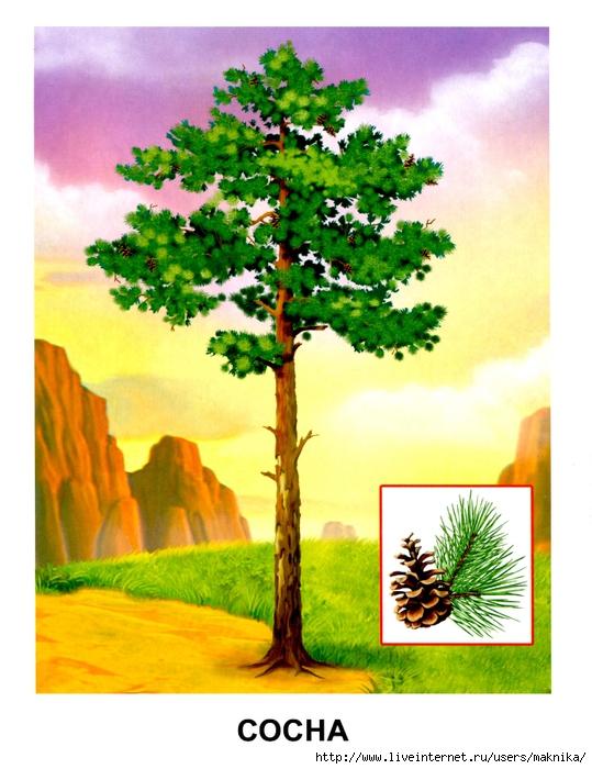 Деревья (07) (539x700, 285Kb)