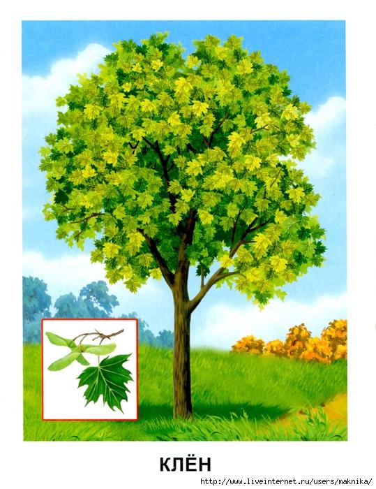 Деревья (08) (539x700, 335Kb)