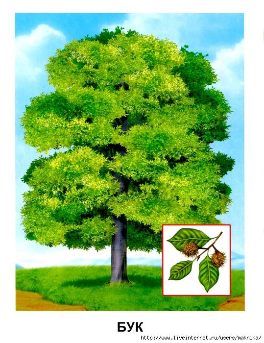 Деревья (10) (539x700, 360Kb)