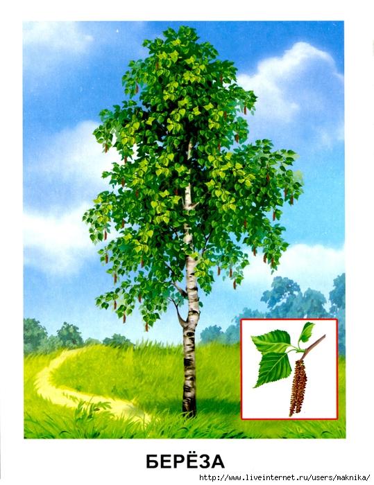 Деревья (12) (539x700, 324Kb)