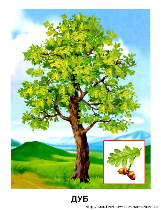 Деревья (15) (539x700, 313Kb)