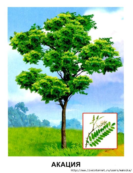 Деревья (16) (539x700, 325Kb)