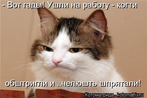 kotomatritsa_0n (500x334, 27Kb)