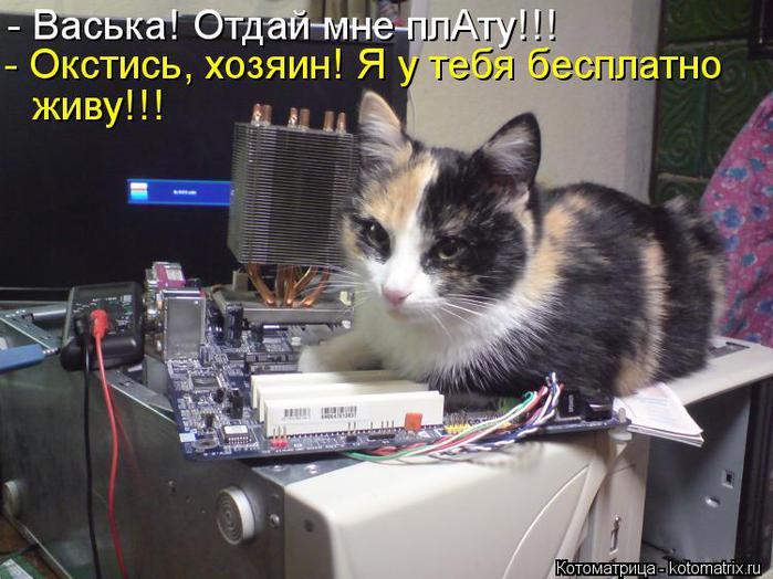 kotomatritsa_8K (700x524, 63Kb)