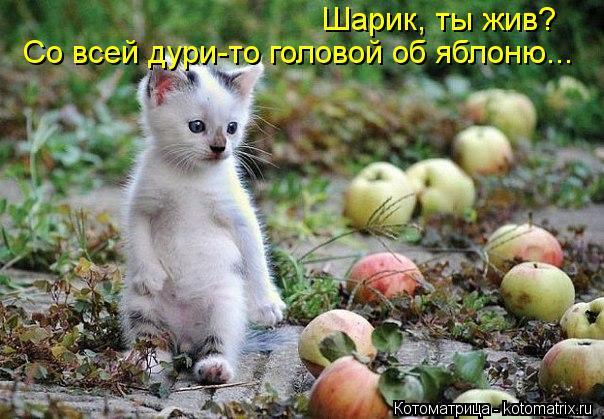 kotomatritsa_E (604x419, 65Kb)