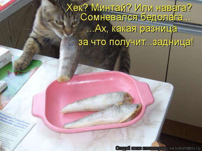 kotomatritsa_N_ (700x524, 55Kb)