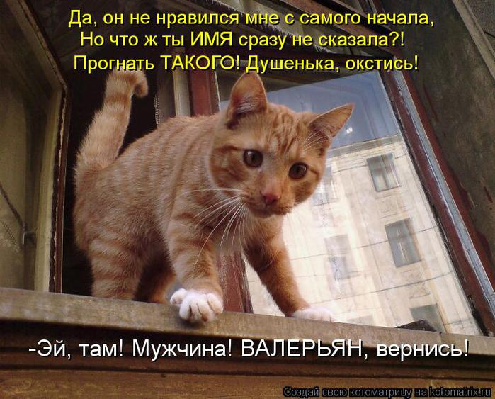 kotomatritsa_qa (700x563, 77Kb)