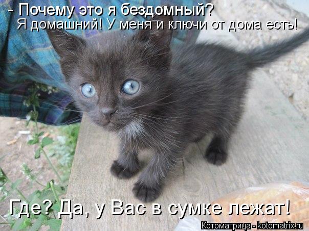 kotomatritsa_XO (604x453, 57Kb)