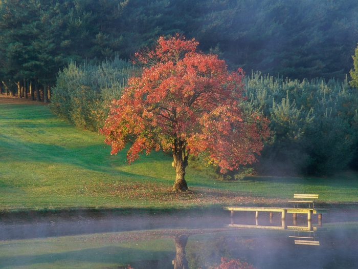 1987155_Calm_Autumn_Morning (700x525, 314Kb)