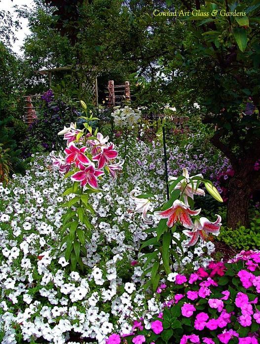 Лилейник - цветок одного дня 16 (527x700, 219Kb)