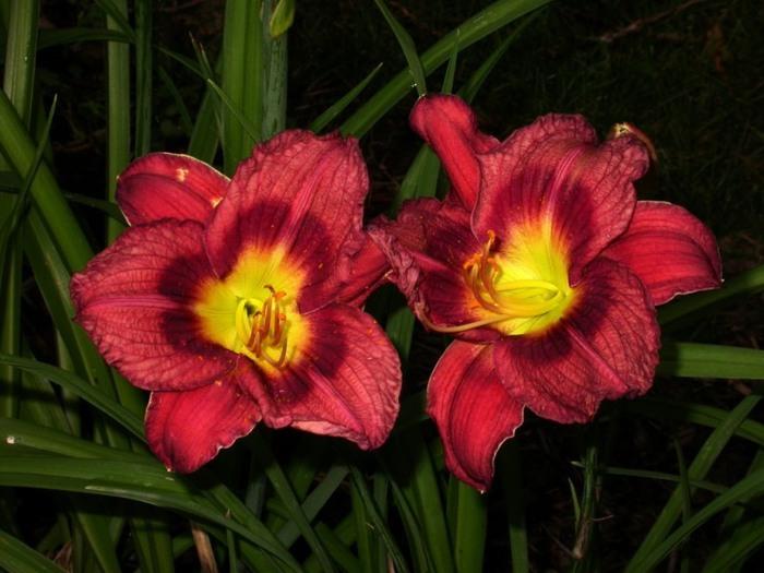 Лилейник - цветок одного дня 75 (700x525, 89Kb)