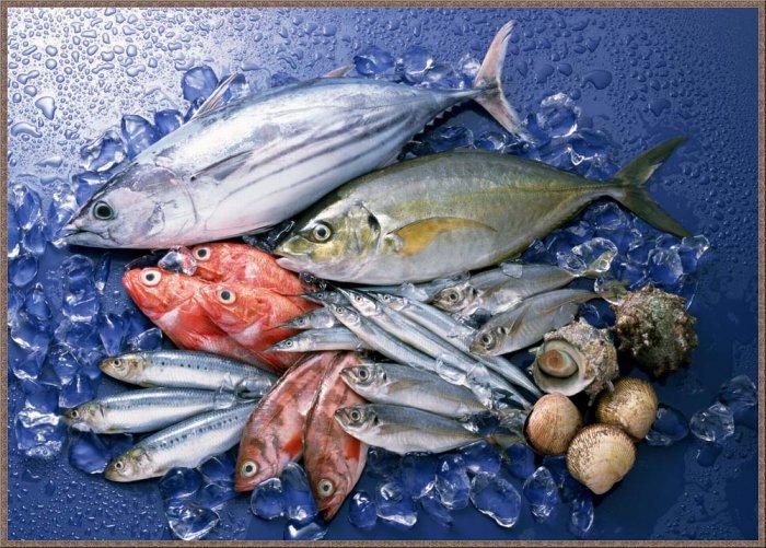 1273156686_1256794728_fish-14 (700x501, 113Kb)