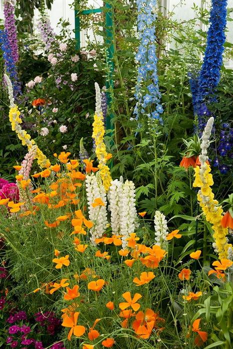 сады Клода Моне3 (466x700, 227Kb)