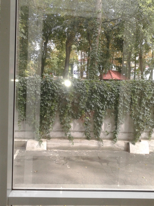Вид из окна/2471598_Foto0025 (525x700, 312Kb)