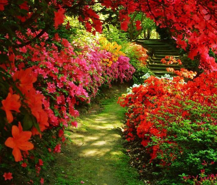 Поста просто садите нажимайте цветы