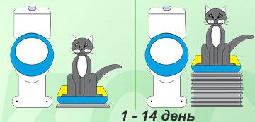 3925073_Priuchaemkoshkukunitazu1 (360x173, 69Kb)