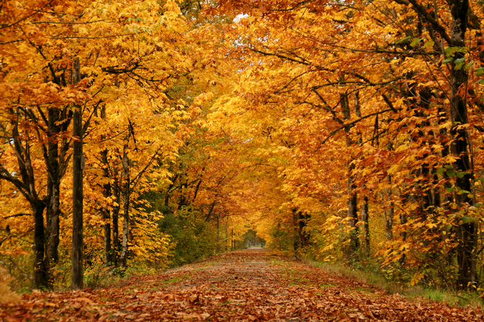 4741324_79509056_All_sizes__Into_Autumn__Flickr__Photo_Sharing (700x465, 915Kb)