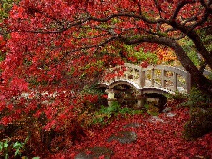 Japanese Garden, Royal Roads University, British Columbia (1) (700x525, 198Kb)