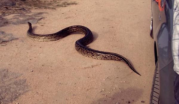 python5 (600x348, 33Kb)