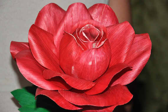 rose-red (570x379, 21Kb)