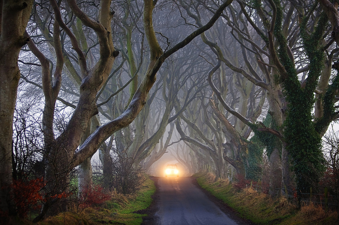 Dark-Hedges03 (700x464, 238Kb)