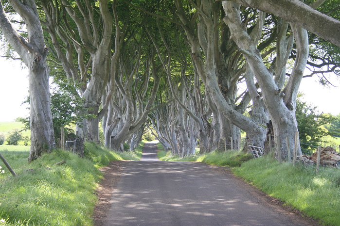 Dark-Hedges07 (700x466, 243Kb)