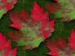 Превью красный лист (320x240, 18Kb)