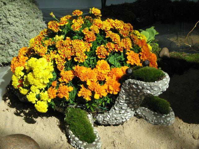 черепах (640x480, 94Kb)