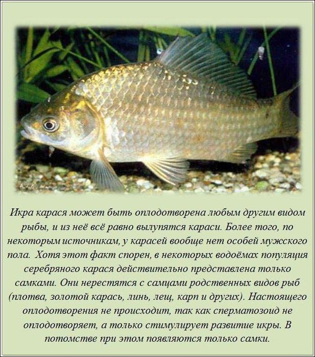 interesnye_fakty_20_foto_15 (617x700, 121Kb)