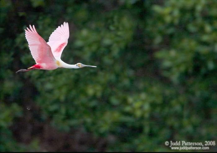 розовая-птица-счастья (700x492, 32Kb)