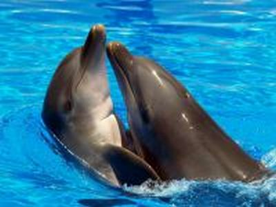 200x150-images-stories2-417-dolphins (400x300, 19Kb)