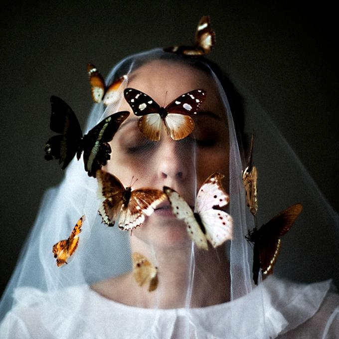 бабочки10 (680x680, 679Kb)