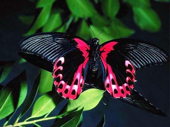 17 Mariposa (580x435, 59Kb)