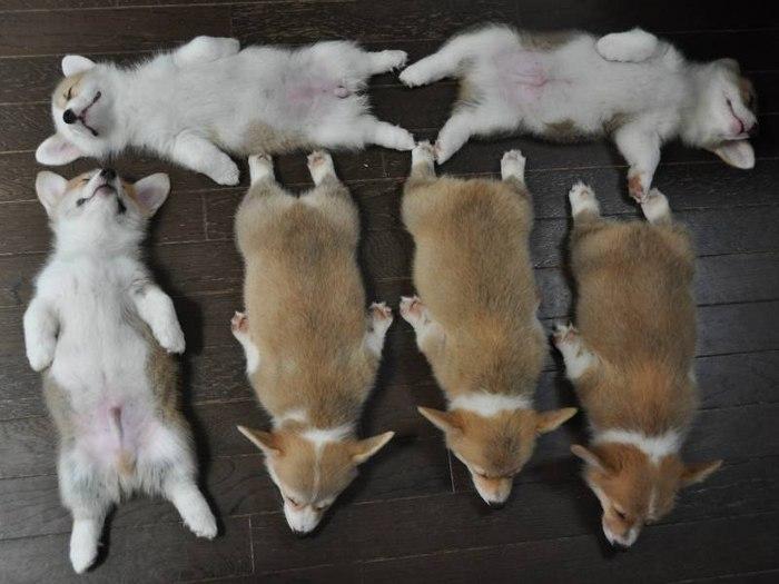 смешные щенки фото 4 (700x525, 63Kb)
