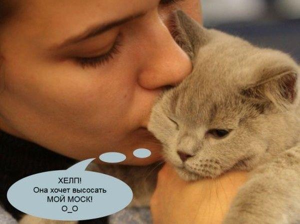 cats_01 (600x449, 45Kb)