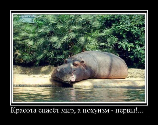 1249287436_hiop.ru_demotivator-220 (640x507, 93Kb)