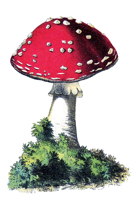 mushroom red vintage image--graphicsfairy012 (475x700, 186Kb)