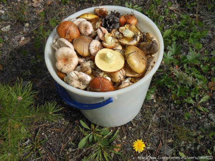 Какие грибы в июне в омской области