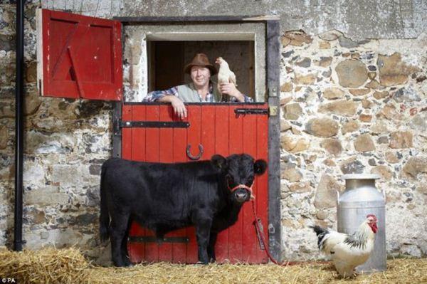 Двухлетний бык имеет рост от копыт до холки всего 76 см (600x399, 57Kb)